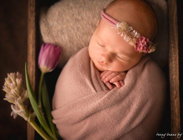 raleigh newborn photographer - eva 1